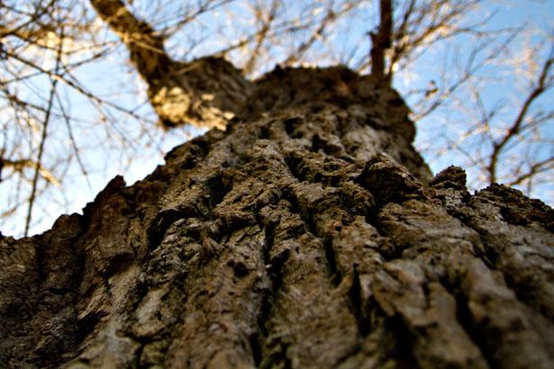 Le caratteristiche del legno di rovere - Arredo Parquet